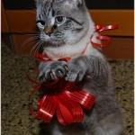 подарочнй кот